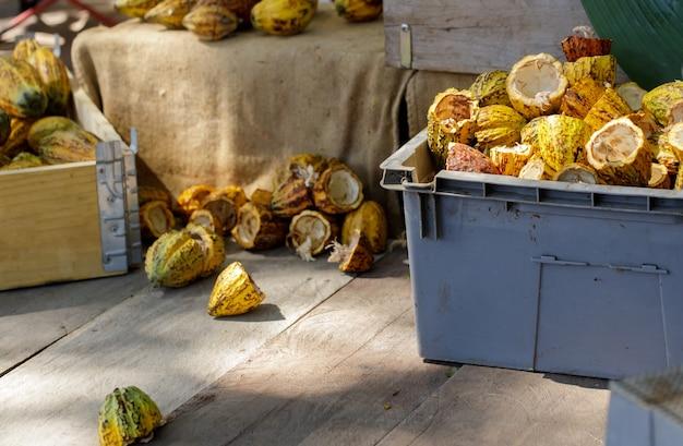 Cacaobonen en cacaopeul op een houten oppervlak. Premium Foto