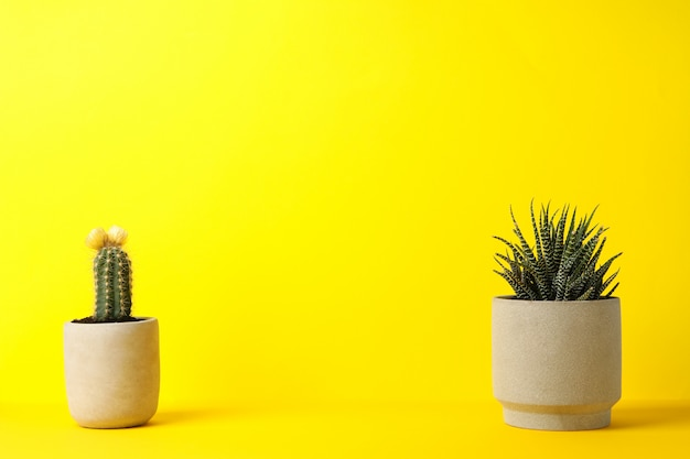 Cactus en vetplant op gele ondergrond Premium Foto