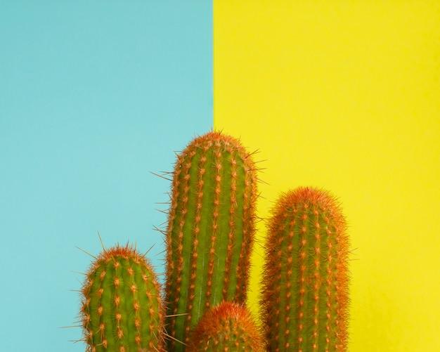 Cactus fashion design. minimale mode stillife. trendy heldere kleuren. Premium Foto
