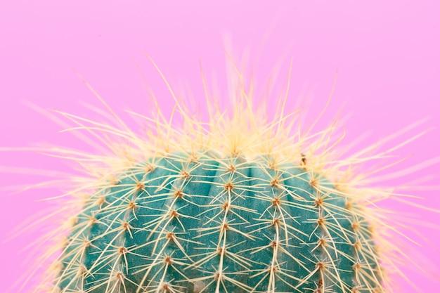 Cactus fashion design Gratis Foto