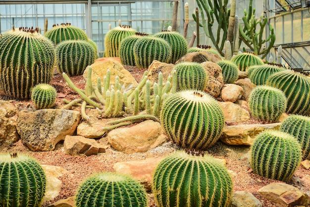 Cactus gehouden in een tuin die er dor uitziet Premium Foto