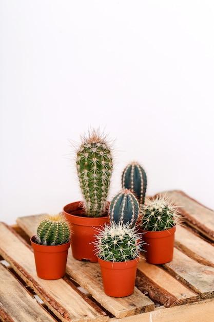 Cactus in een pot Gratis Foto