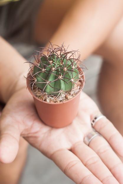 Cactus in potplant op handen Premium Foto