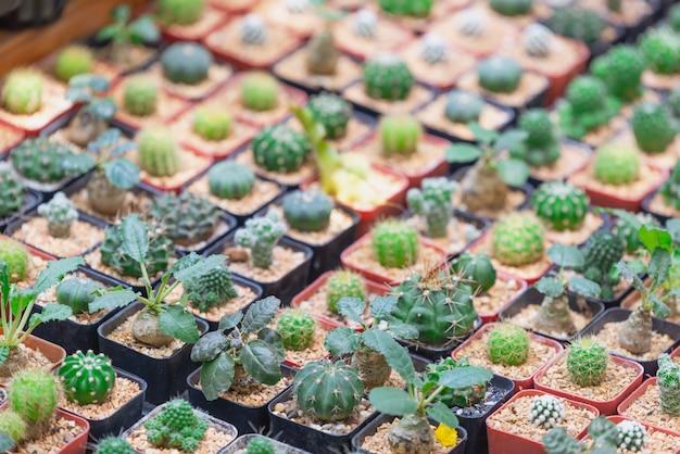 Cactus plant verlaat patroon. groene bladeren. Premium Foto
