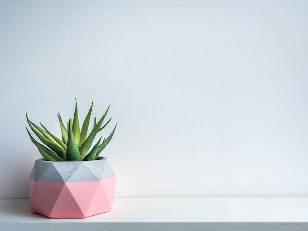 Cactus pot. betonnen pot. moderne geometrische betonnen plantenbak. Premium Foto