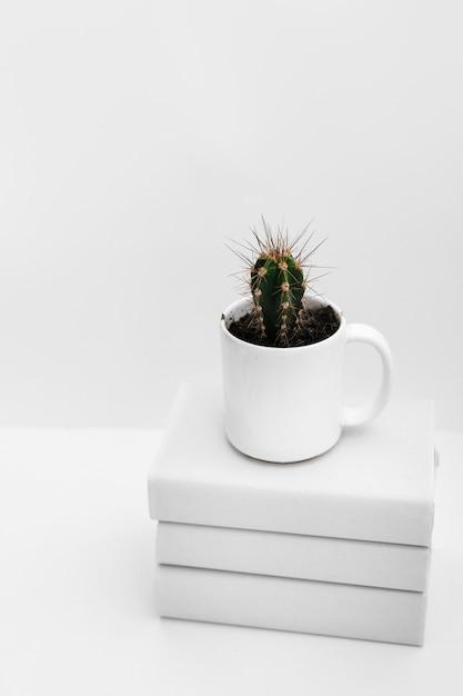 Cactusinstallatie in witte mok over gestapeld van boeken tegen witte achtergrond Gratis Foto