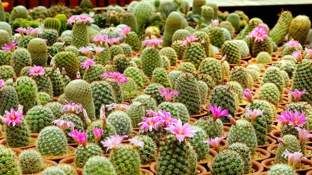 Cactusplant variëteit soorten binnen de kwekerij Premium Foto