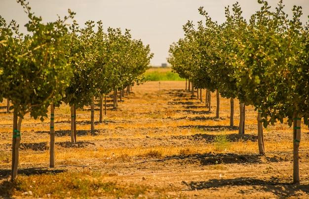 Californië boomgaarden Gratis Foto