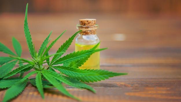 Cannabiskruid en bladeren voor de behandeling van bouillon, tinctuur, extract, olie. Premium Foto