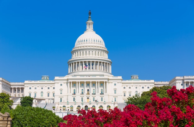 Capitol die de roze bloemen de vs bouwen van washington dc Premium Foto