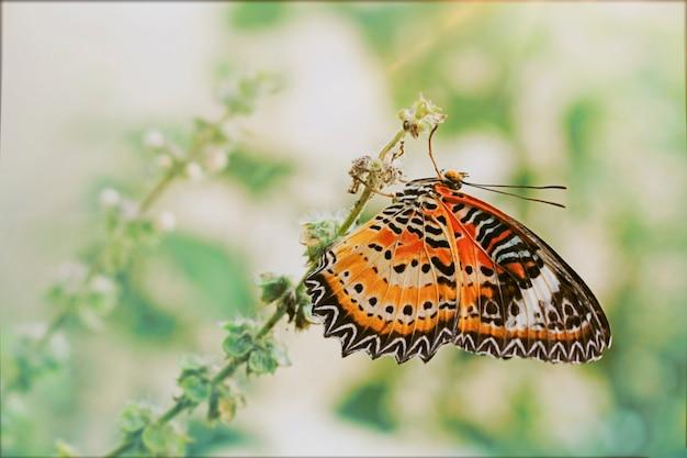 Cethosia cyane euanthes. mooie vlinders in de tuin. Premium Foto