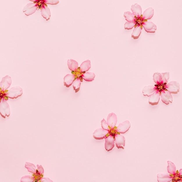 Cherry blossom-patroon op een roze achtergrond Gratis Foto