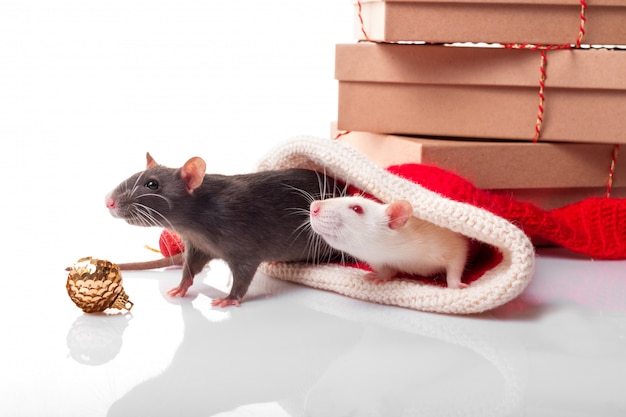 Chinees gelukkig jaar van rat 2020. zwart-witte ratten als yin yang concept. twee ratten met nieuwjaardecoraties Premium Foto