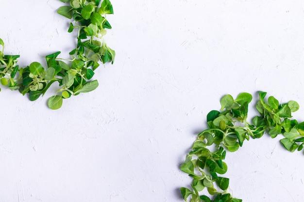 Cirkels op een witte gestructureerde achtergrond van groene sla maïs frame copyspace Premium Foto