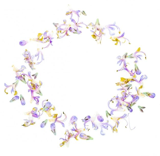 Cirkelvormig frame met delicate paarse bloemen van verse rozemarijn. geïsoleerd op witte achtergrond Premium Foto