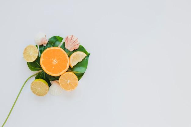Citrusvruchten met zeeschelpen op palmblad Gratis Foto