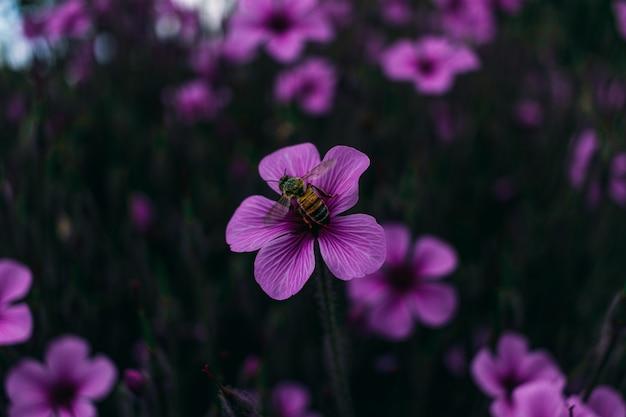 Close-up beeld van een paarse bloem met een bij op het in een weide Gratis Foto