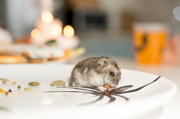 Close-up beeld van schattige hamster op een bord Gratis Foto