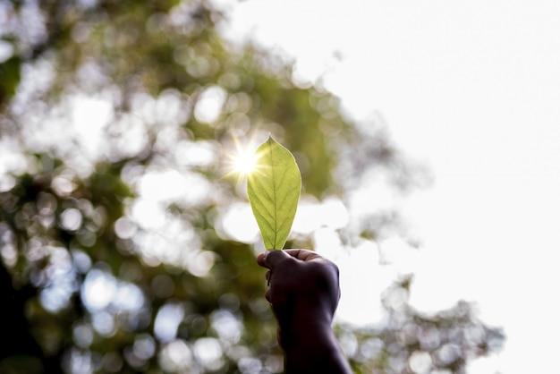 Close-up die van de hand van een mannetje is ontsproten die een groen blad met een vage achtergrond houdt Gratis Foto