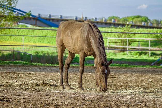 Close-up die van een bruin paard is ontsproten dat gras met groen eet Gratis Foto