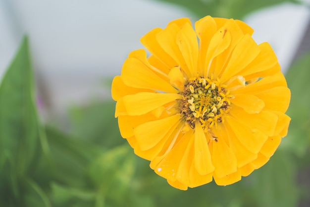 Close-up die van een gele bloem is ontsproten die in de tuin groeit Gratis Foto