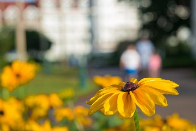 Close-up die van een mooie bloem van susan met zwarte ogen is ontsproten Gratis Foto