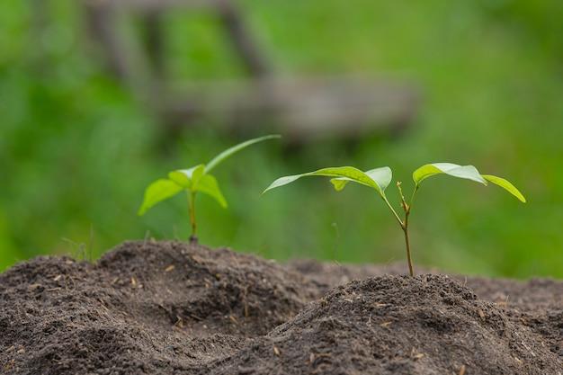 Close-up foto van het jonge boompje van de plant groeit Gratis Foto