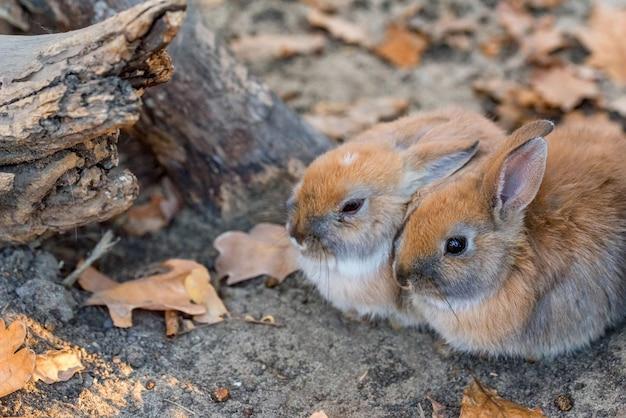 Close-up foto van twee jonge schattige konijnen Premium Foto