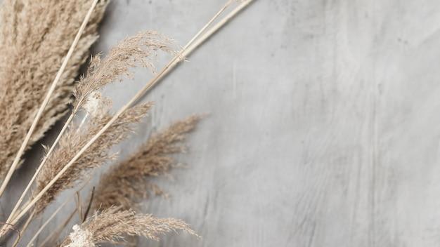 Close-up gedroogde planten decoratie op betonnen muur Gratis Foto