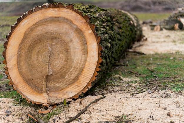 Close-up hout voor kampvuur Gratis Foto