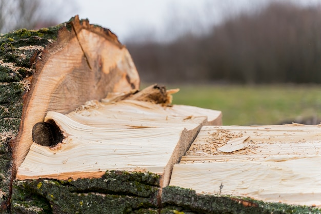 Close-up hout voor vreugdevuur Gratis Foto