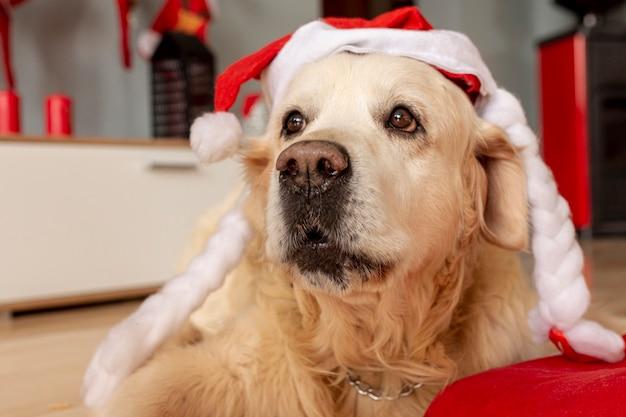 Close-up labrador dat thuis santahoed draagt Gratis Foto