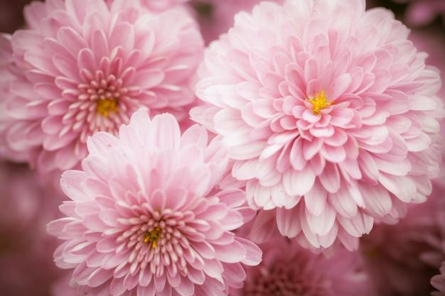 Close-up macro bloem Gratis Foto