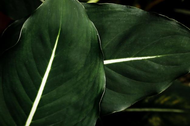 Close-up mooie groene bladeren Gratis Foto