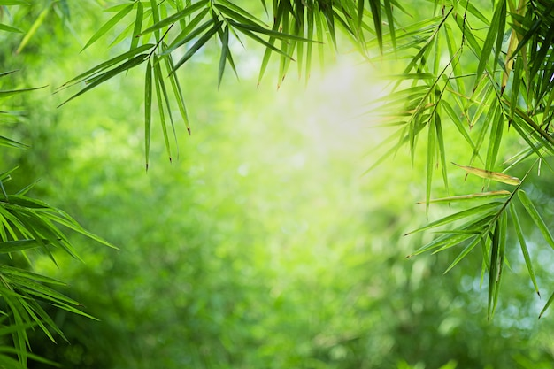 Close-up mooie mening van blad van het aard het groene bamboe op groen vage achtergrond met zonlicht en copyspace Premium Foto