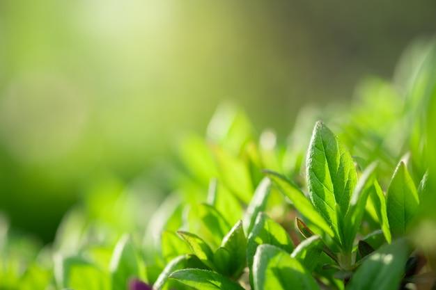 Close-up mooie mening van vaag aard groen blad op groen Premium Foto