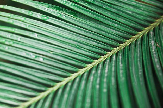 Close-up nat palmblad Gratis Foto