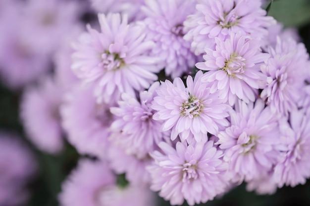 Close-up purpere bloem op de tuin geweven achtergrond Premium Foto