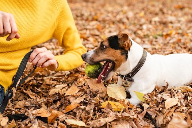 Close-up schattige hond spelen met een bal Gratis Foto