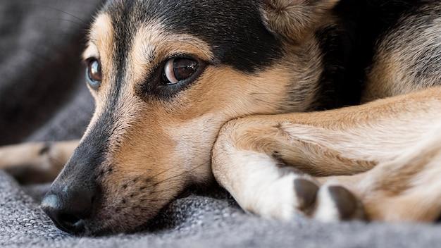 Close-up schattige hond zittend Gratis Foto