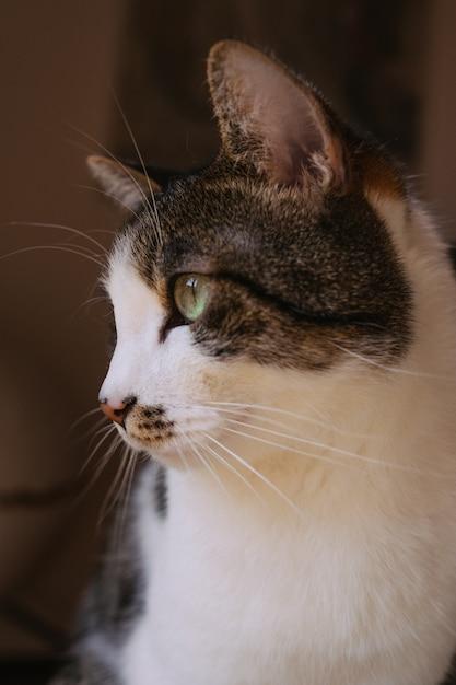 Close-up selectief schot van mooie binnenlandse kat met lichtgroene ogen Gratis Foto