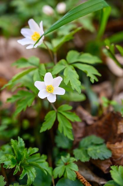 Close-up selectieve aandacht van een geweldige bloem onder zonlicht Gratis Foto