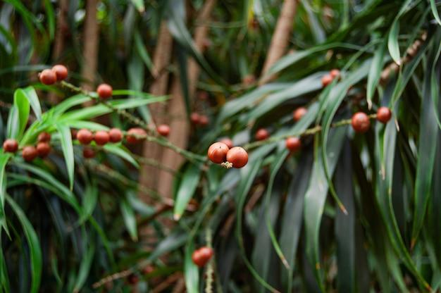Close-up selectieve focus shot van rode bessen op een struik met planten Gratis Foto