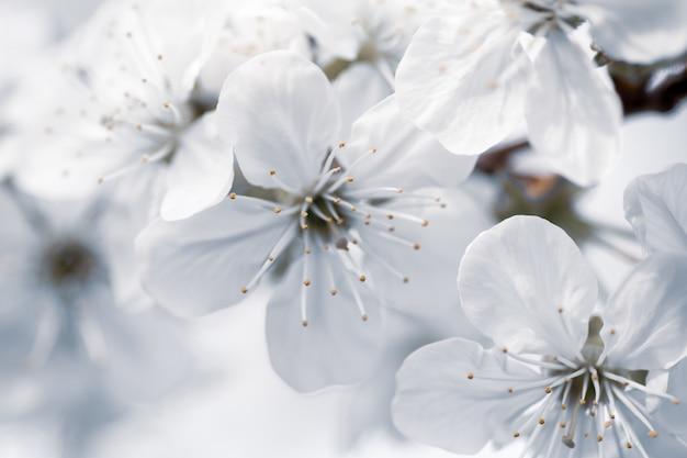 Close-up selectieve focus shot van witte bloemen met een onscherpe achtergrond Gratis Foto