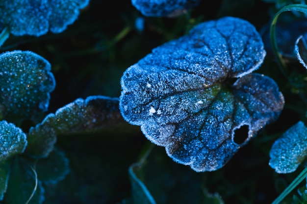 Close-up shot van bevroren bladeren in maksimir park in zagreb, kroatië overdag Gratis Foto