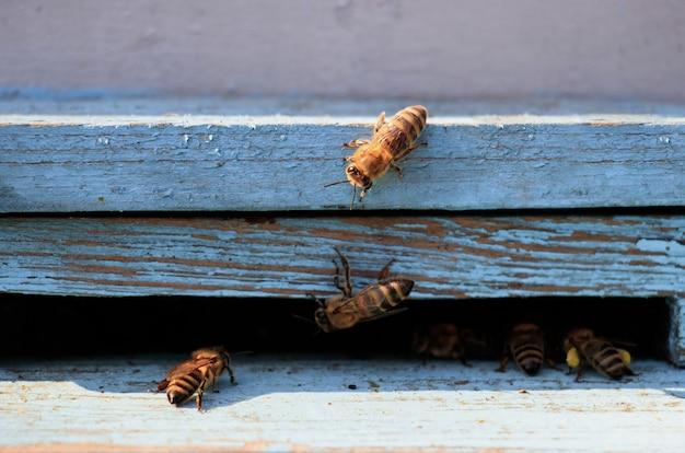 Close-up shot van bijen op een houten oppervlak overdag Gratis Foto
