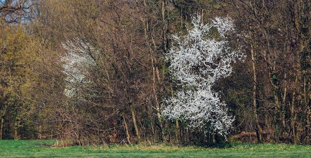 Close-up shot van bomen en groen in maksimir park in zagreb kroatië tijdens de lente Gratis Foto