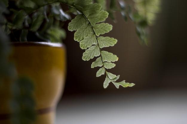 Close-up shot van de bladeren van een plant in een kom Gratis Foto