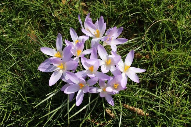 Close-up shot van de paarse bloeiende bloem in het veld op een zonnige dag Gratis Foto