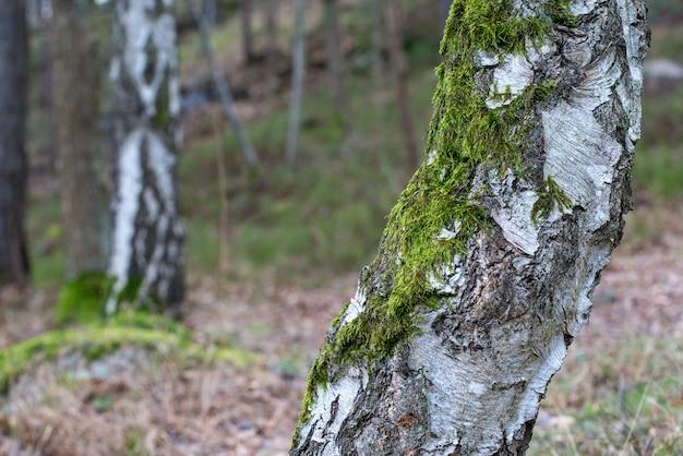 Close-up shot van een boom bedekt met mos op een onscherpe achtergrond Gratis Foto